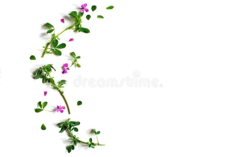 Цветки плоско кладут иллюстрация вектора