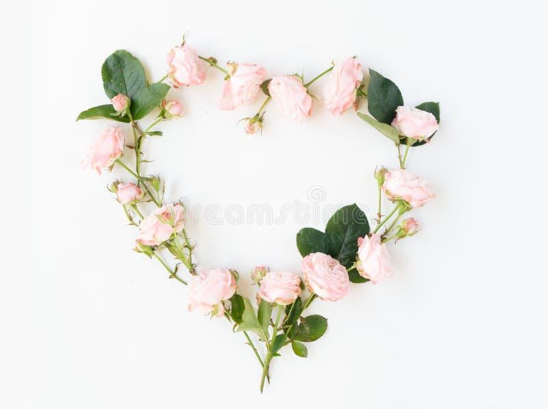 Цветки плоско кладут состав стоковое фото