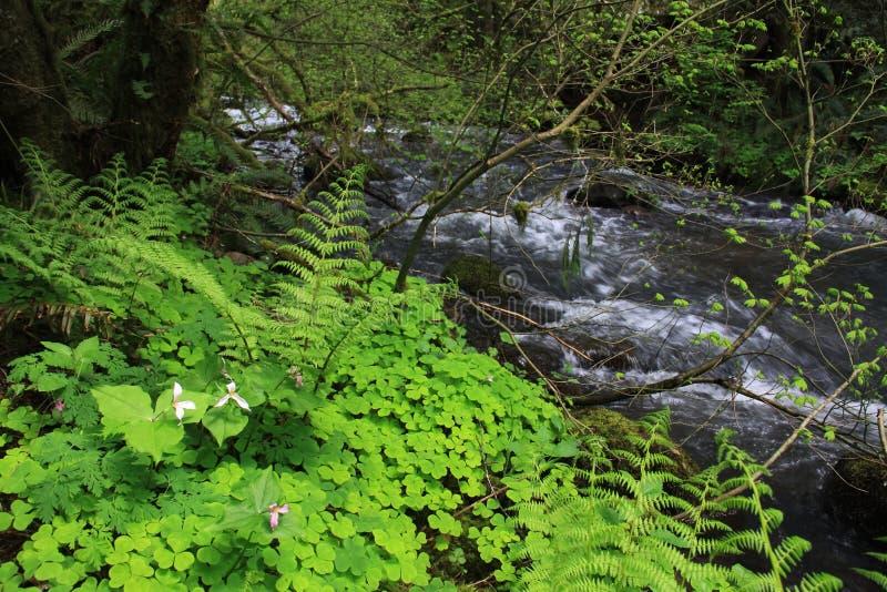 Цветки потока леса стоковые фотографии rf