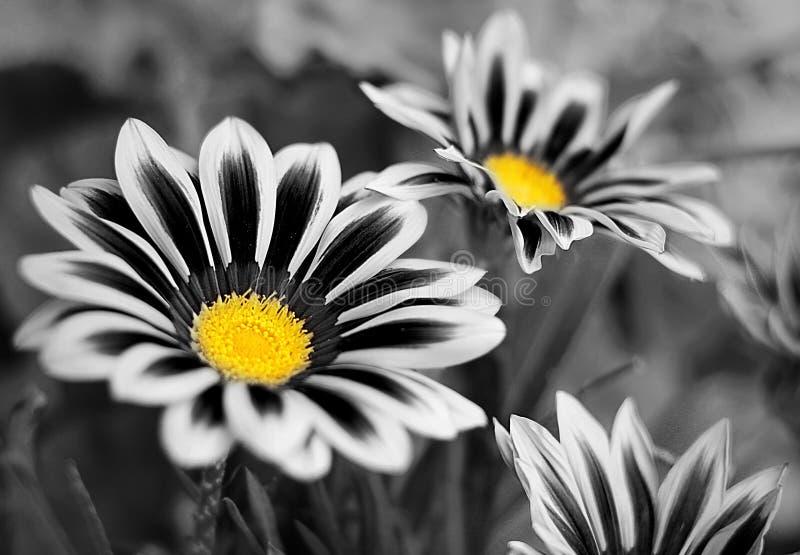 Цветки поля стоковые изображения