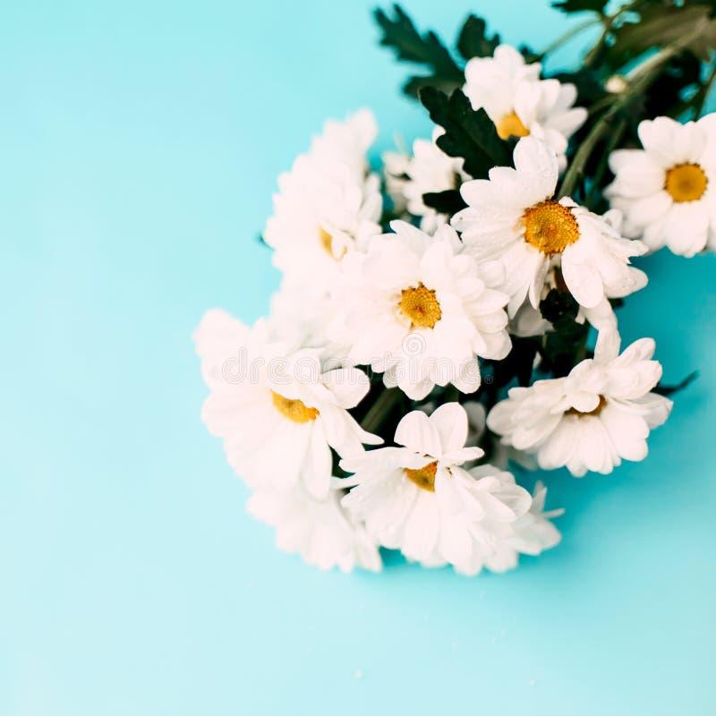 цветки предпосылки голубые белые стоковое изображение