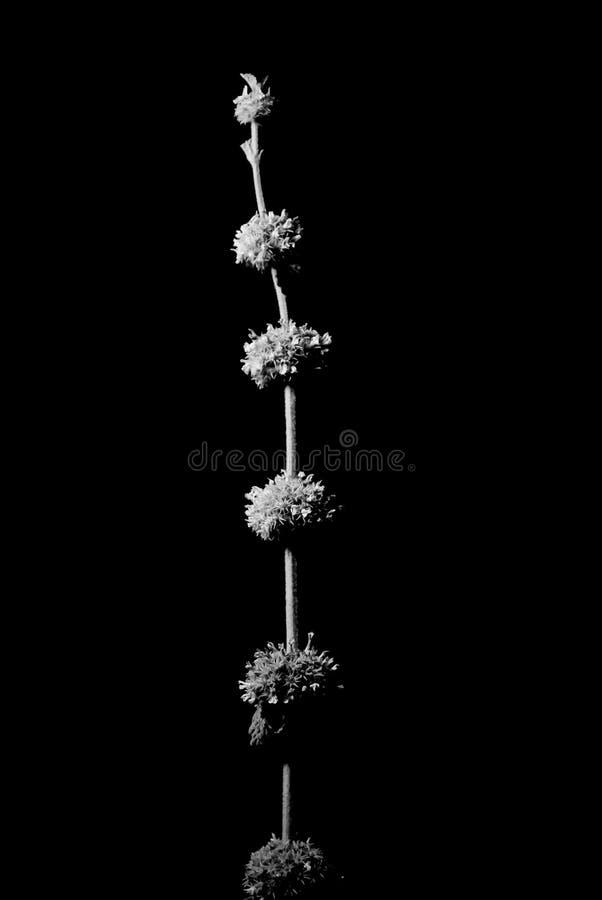 цветки предпосылки черные стоковая фотография