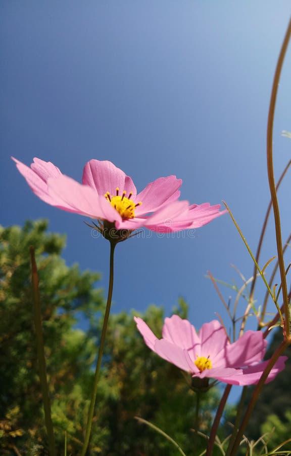 Цветки природы влюбленности стоковые изображения