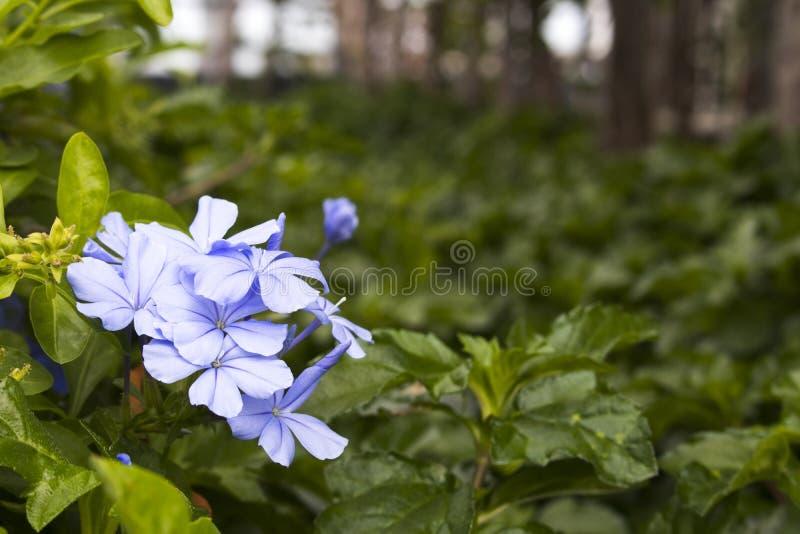 Цветки природы текстуры предпосылки пурпурные на стиле открытки сада стоковое изображение