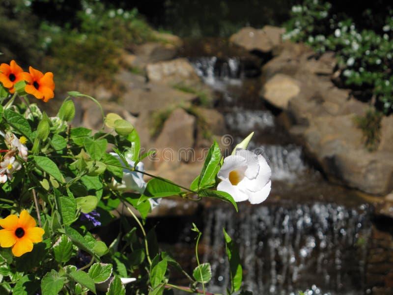 Цветки против водопада стоковые изображения rf