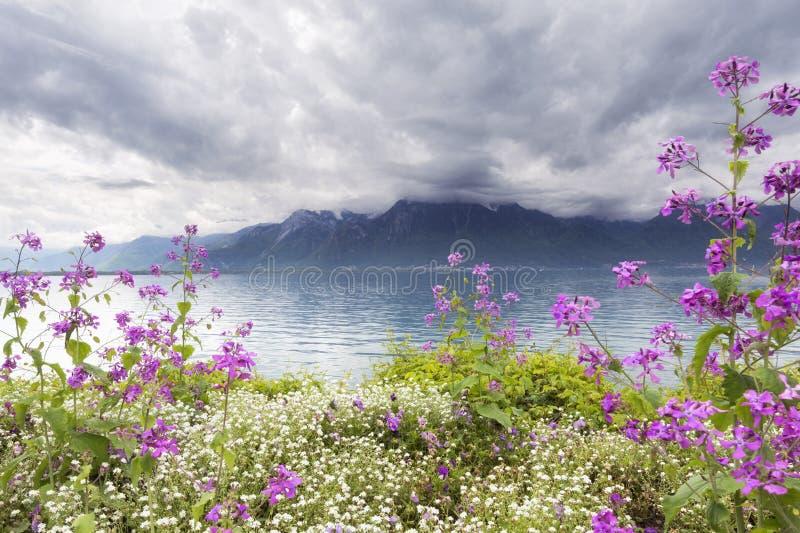 Цветки против гор, Монтрё. Швейцария стоковая фотография rf