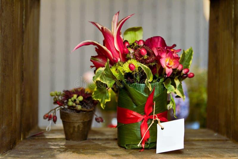 цветки пука стоковые изображения rf