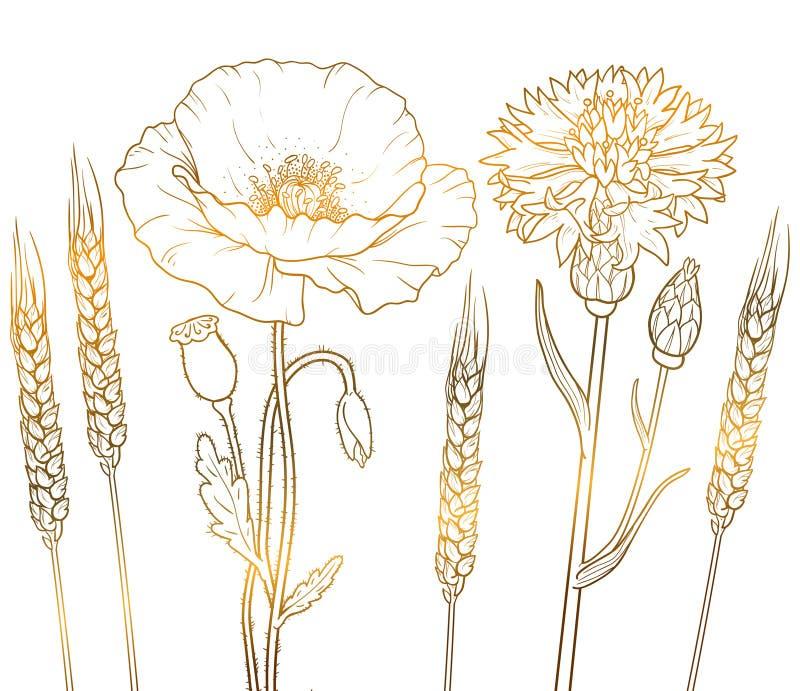 Цветки плана золота графиков floristic, мак, cornflower, пшеница бесплатная иллюстрация