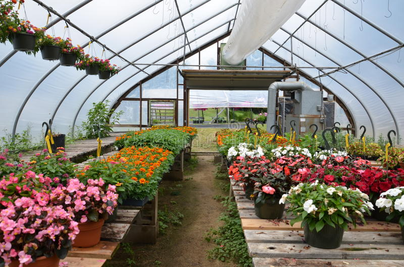 Цветки растут на зеленом доме в Нью-Гэмпшир стоковое изображение