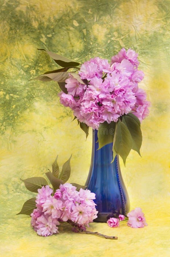 Цветки Сакуры в голубой вазе. стоковая фотография rf