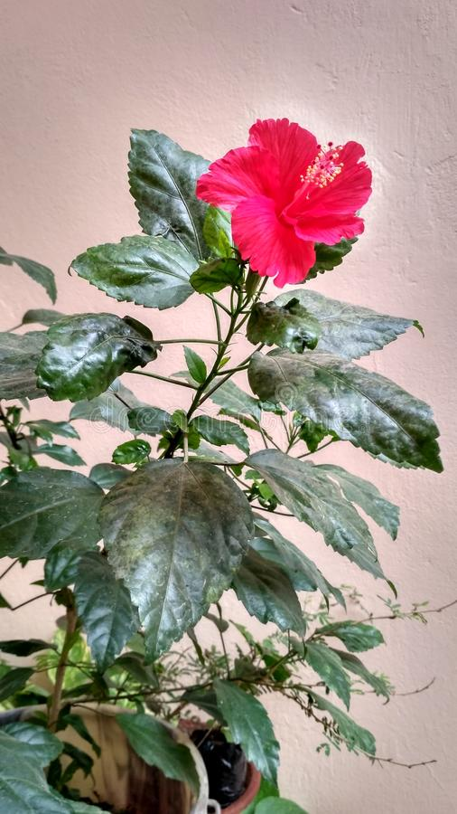 цветки самонаводят стоковая фотография