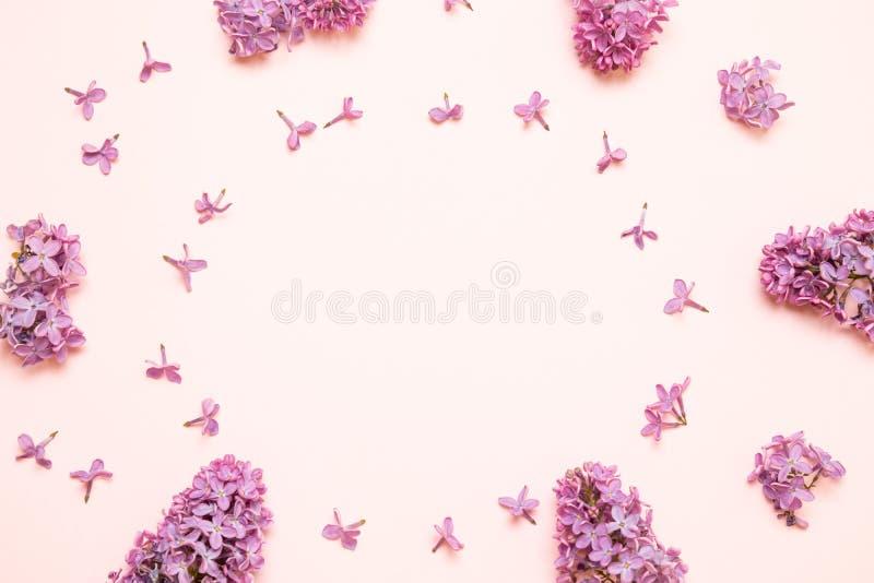 Цветки сирени свежих ветвей пурпурные на розовой предпосылке стоковые изображения rf