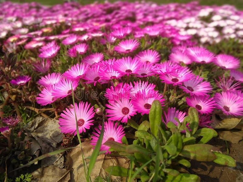Цветки с лист в парке стоковая фотография rf