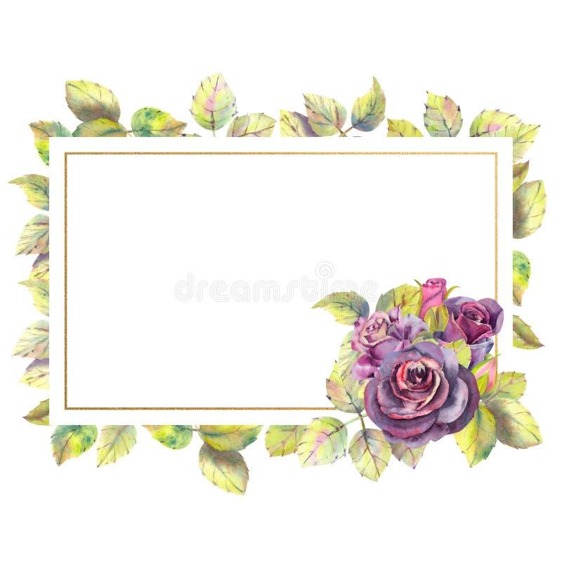 Цветки темных роз, зеленых листьев, состава в геометрической золотой рамке Прямоугольная рамка Составы акварели иллюстрация вектора