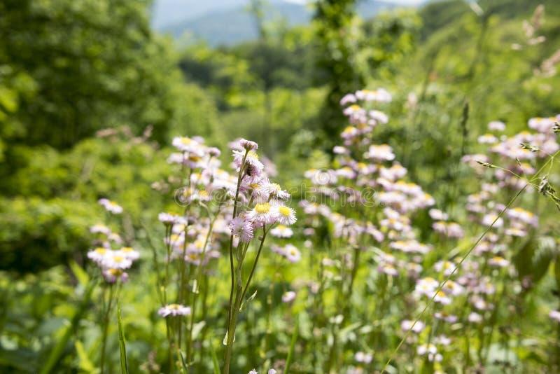 Цветки Теннесси стоковая фотография rf