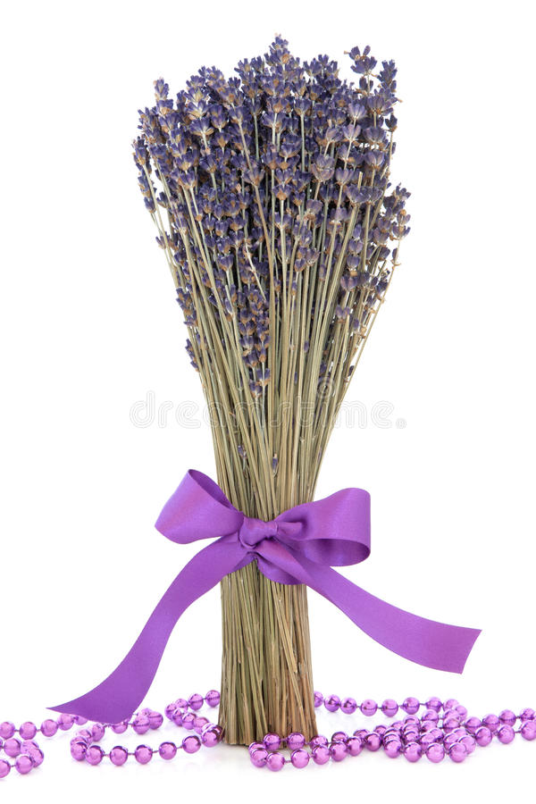 Цветки травы лаванды стоковая фотография