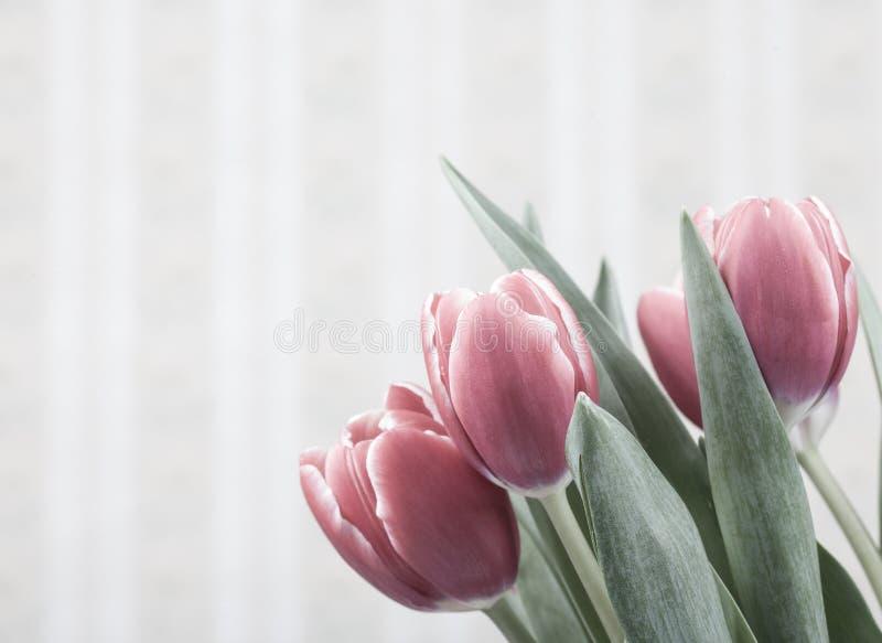 Цветки тюльпана над винтажной предпосылкой стоковые фотографии rf