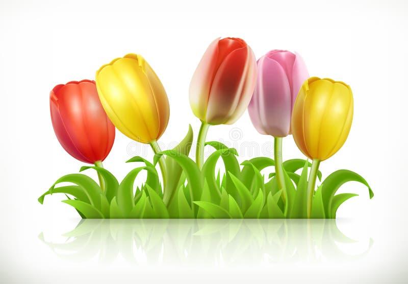 Цветки тюльпанов и трава весны, значок вектора иллюстрация штока