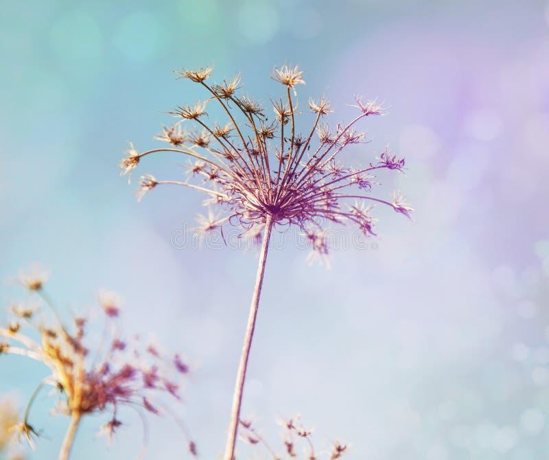 Цветки луга Высушенные цветки поля стоковая фотография rf