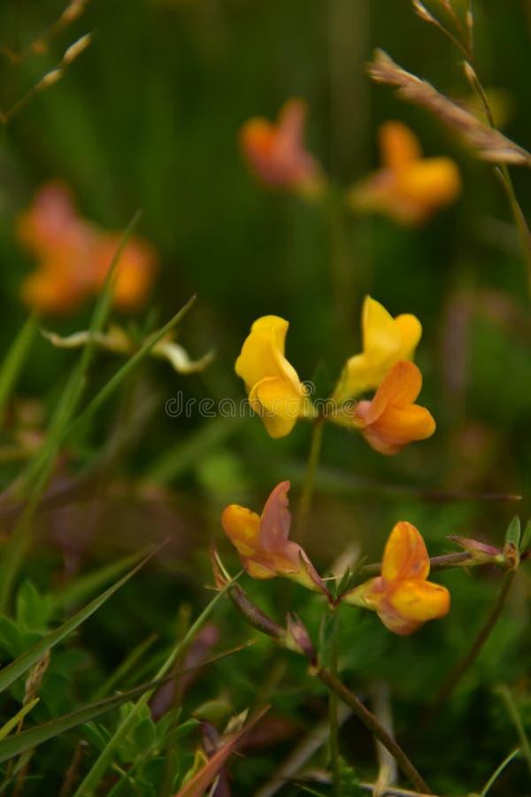 Цветки лугов стоковая фотография rf