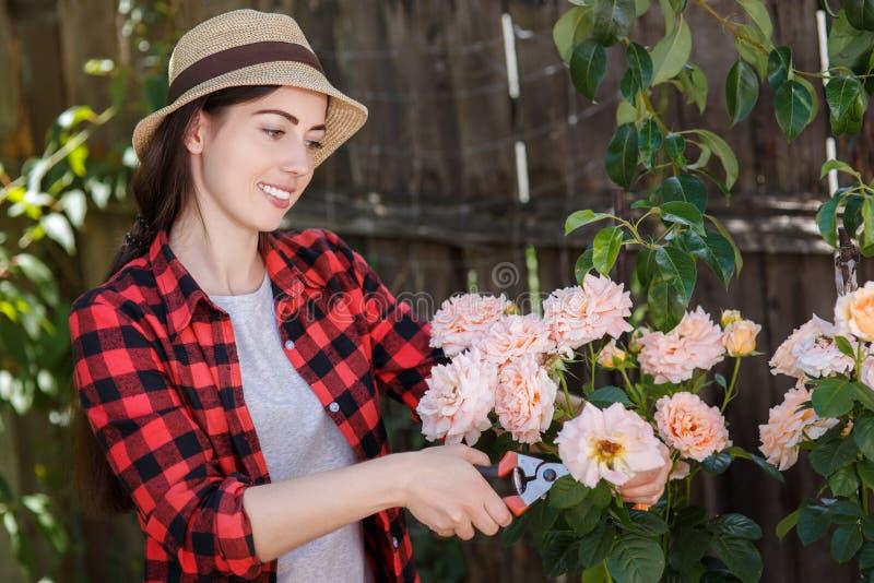 Цветки утески девушки садовника с секаторами стоковые фотографии rf