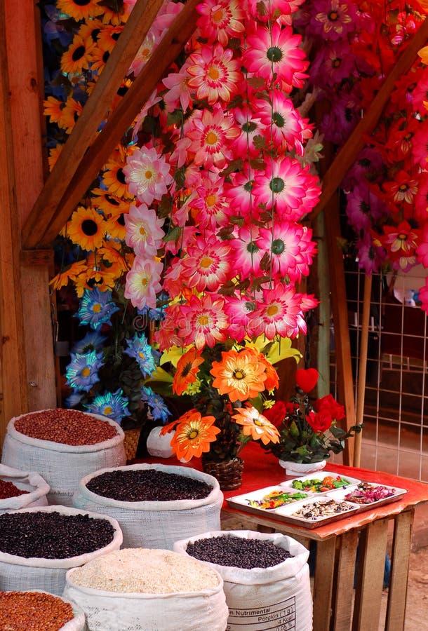 цветки фасолей стоковые изображения