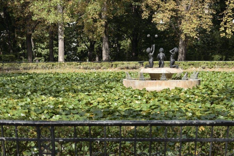 Цветки фонтана воодушевленные к лето стоковые изображения