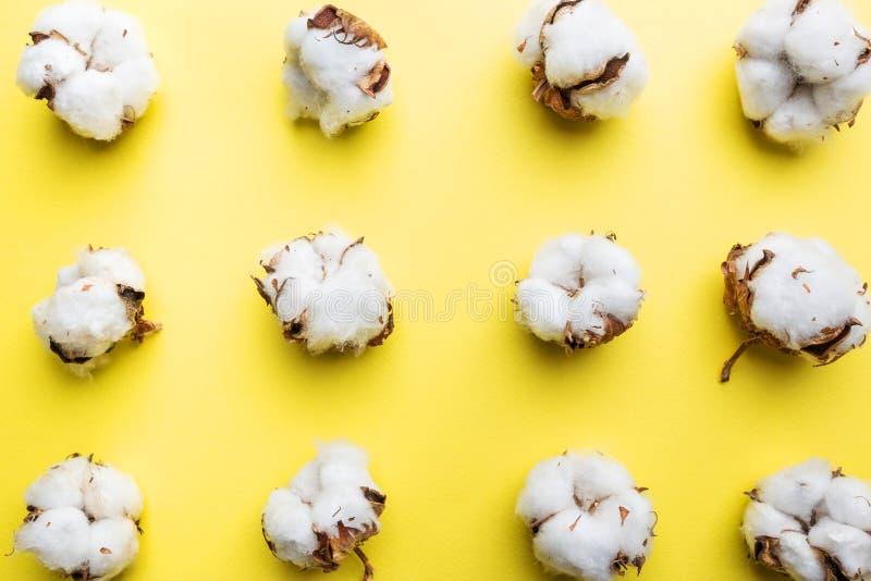 Цветки хлопка на желтом цвете стоковое фото rf