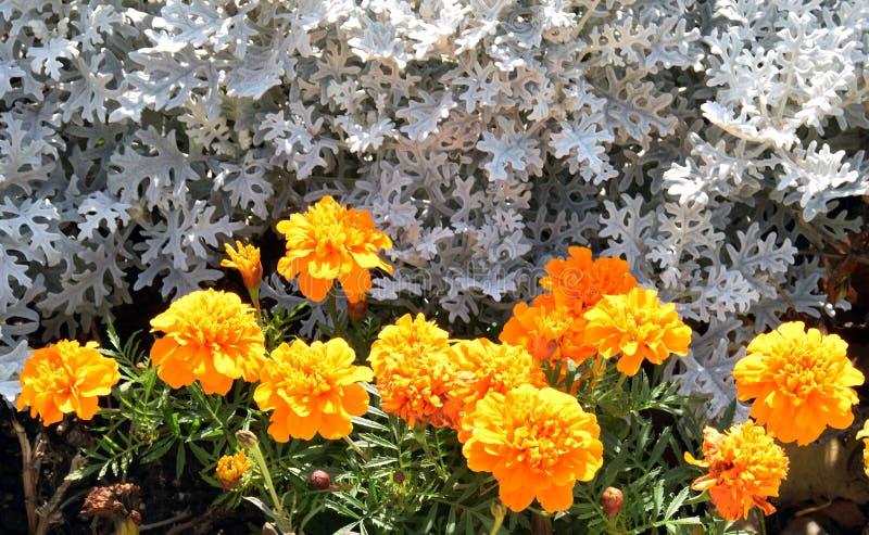 Цветки цвета в саде стоковое фото