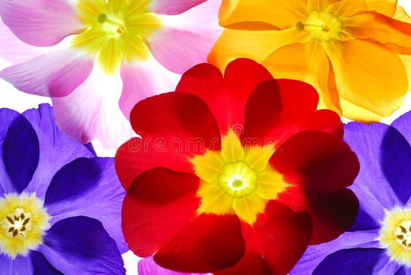 цветки цвета стоковое фото rf