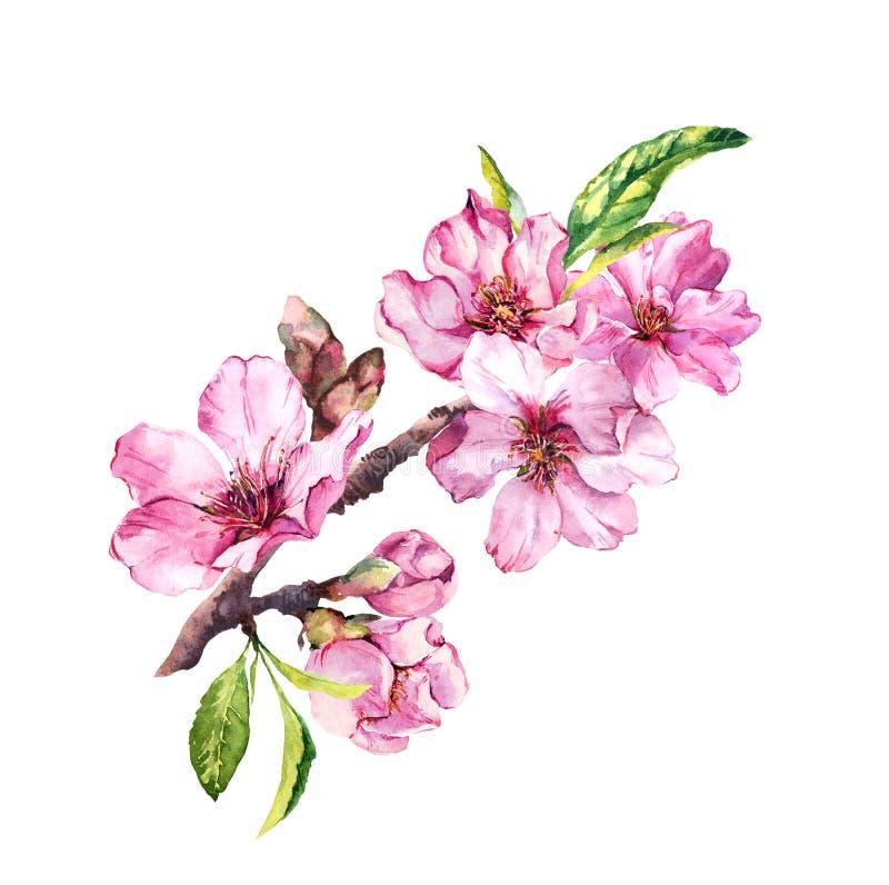 Цветки цветения весны, цветя пинк Сакура, вишня в весеннем времени Ветвь акварели флористическая иллюстрация вектора