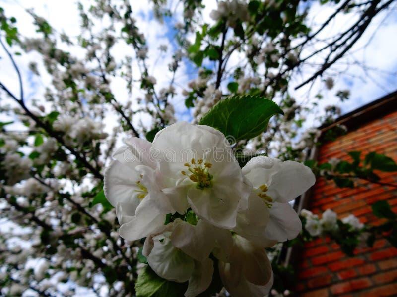 Цветки цветения стоковые изображения rf