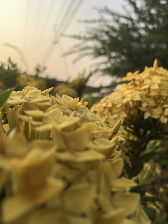 Цветки шипа стоковое фото