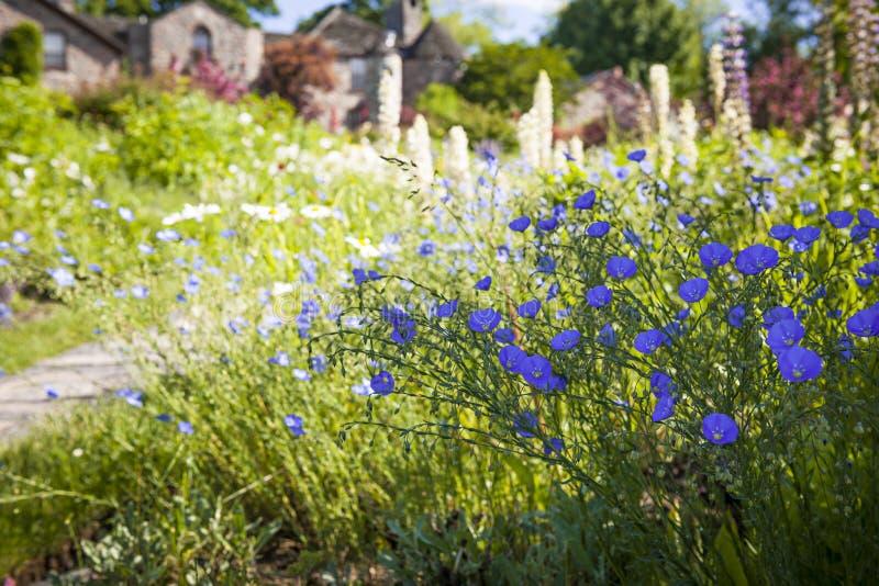 Цветки льна в саде лета стоковое изображение rf
