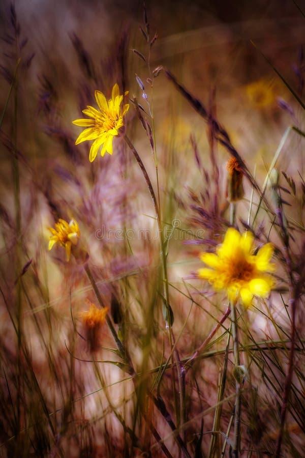Цветки дюны стоковые изображения rf
