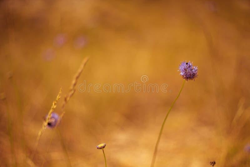 Цветки дюны стоковые фото