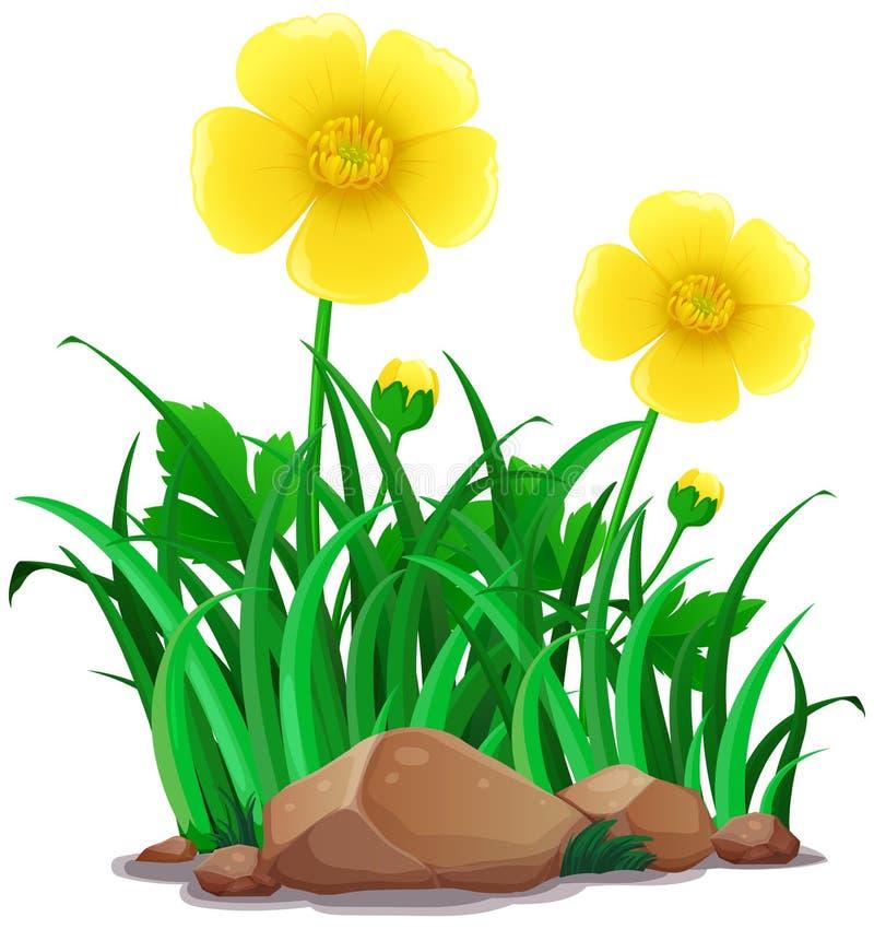 Цветки лютиков в желтом цвете бесплатная иллюстрация