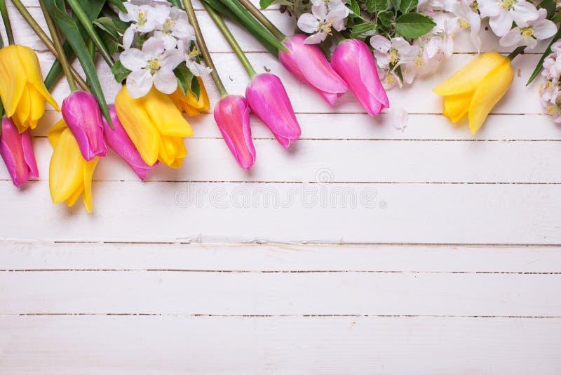 Цветки яблони и розовые и желтые тюльпаны на белое деревянном стоковое изображение