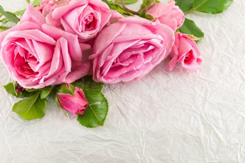 Цветки японца розовые в коробке стоковые изображения