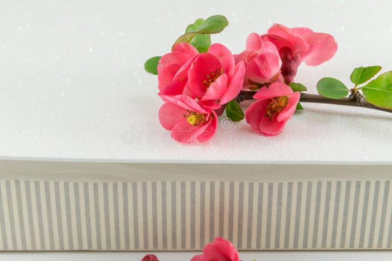 Цветки японца розовые стоковое фото rf