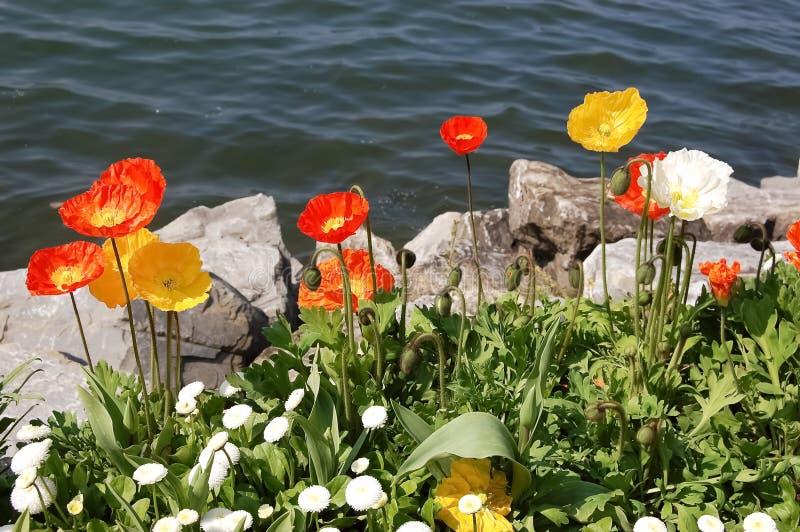 Цветки яркой весны красные и желтые озером стоковое фото rf