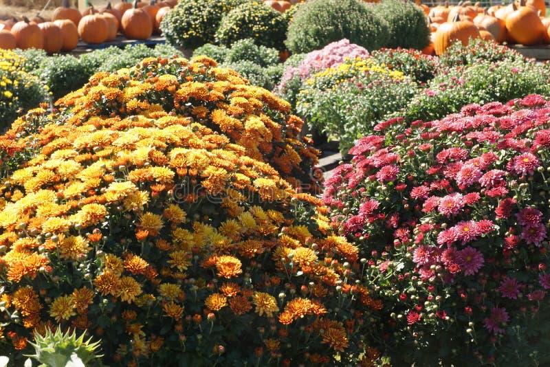 Цветки для продажи! стоковое фото rf