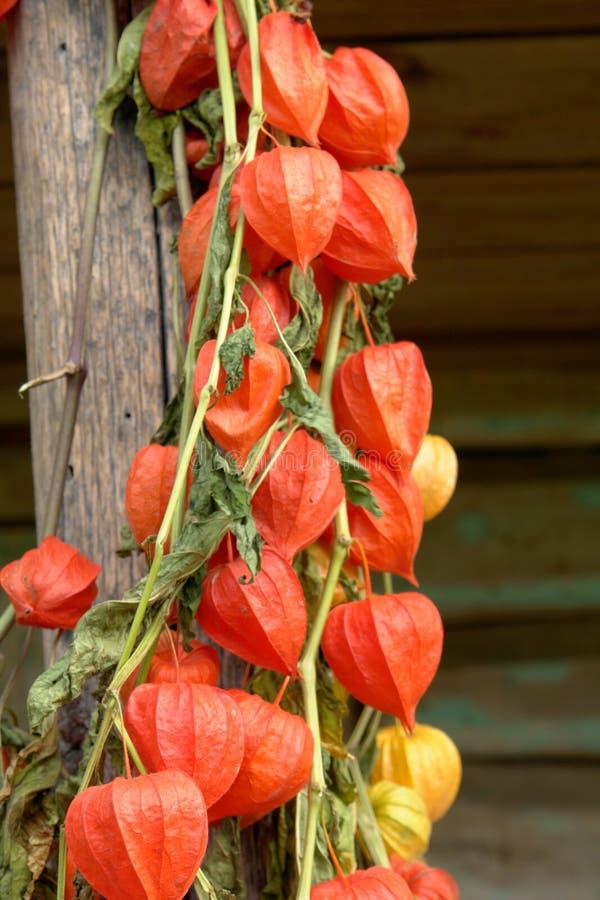 Download цветки стоковое изображение. изображение насчитывающей цветасто - 6862671