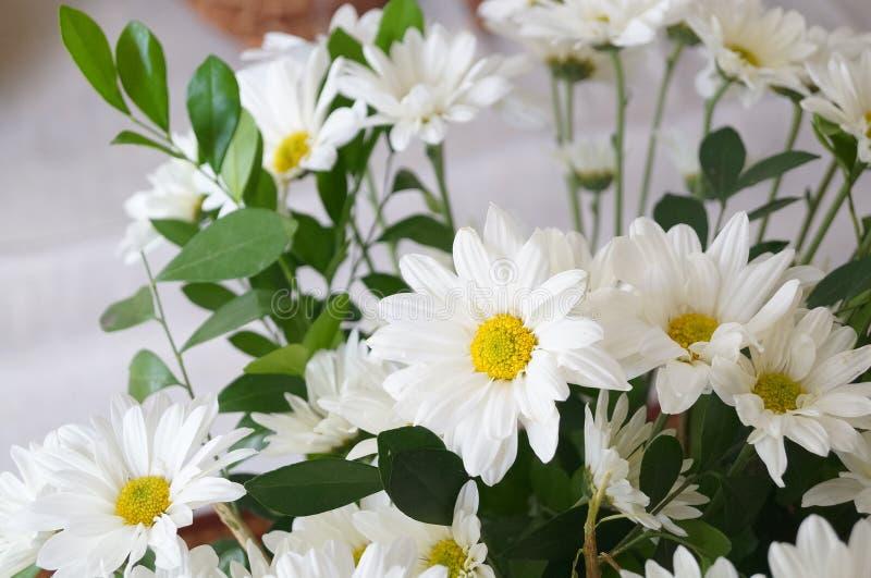 цветки beatifull белые стоковые изображения