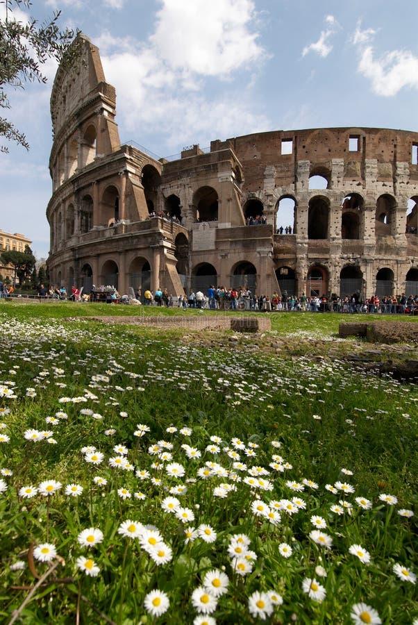 цветки colosseum стоковая фотография rf