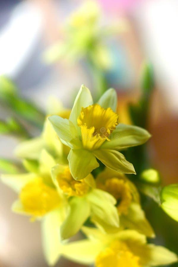 цветки daddofil стоковая фотография rf