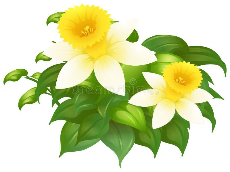 Цветки Daffodil в кусте бесплатная иллюстрация