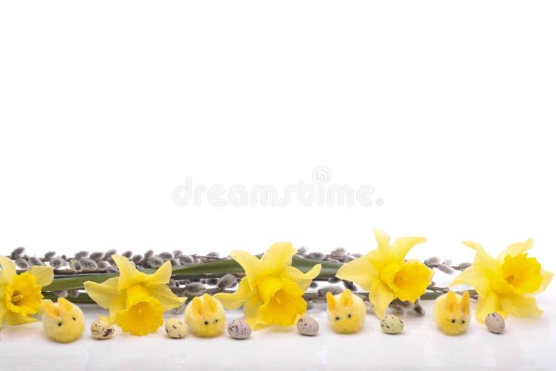 цветки daffodil изолированные над белизной стоковые изображения rf