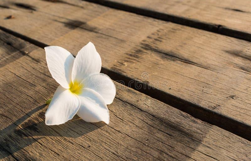 Цветки frangipani на древесине стоковая фотография rf