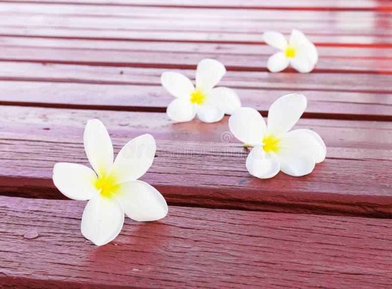 Цветки Frangipani тропические на красной древесине стоковое фото